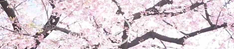 スクリーンショット 2019-04-01 22.48.03